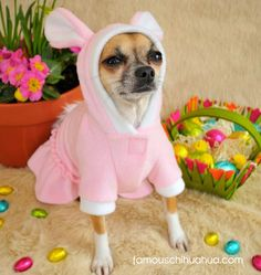 Anna-bell, the Easter bunny!