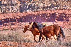 Wild Horses-Navajo Country, Arizona