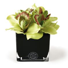 Herve Gambs Green Couture Orchid & Black Glass Cube ($110) ❤ liked on Polyvore featuring home, home decor, floral decor, flowers, plants, fillers, cvece, green, imitation flowers and fake flower arrangement