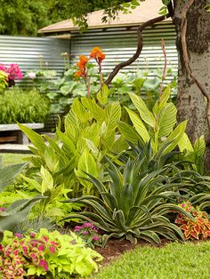 Caladium, canna, coleus, and hosta are just a few of the bold and beautiful flowers that will provide non-stop color in your garden. Tropical Garden Design, Tropical Backyard, Tropical Landscaping, Garden Landscape Design, Tropical Plants, Landscape Plans, Landscape Art, Hillside Landscaping, Front Yard Landscaping