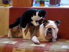 Community Post: 6 Gifs Of Cats Massaging Dogs To Help You De-Stress