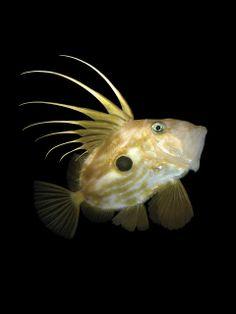 Underwater Photography... Photographer Nicholas Samaras ~ Pix Addictoin