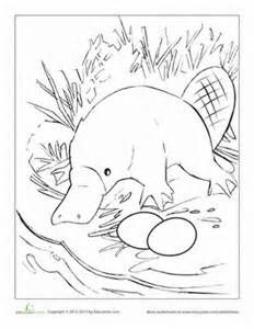 Platypus template around the world pinterest for Duckbill platypus coloring page