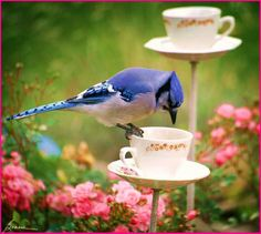 TEA CUPS/BIRD FEEDER