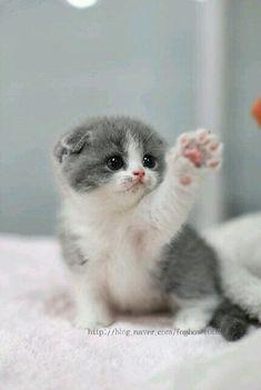 Little kitten says don't leave me!