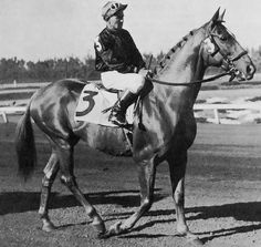 Man O War: just read the fictional story of him by Walter Farley . What a great horse!