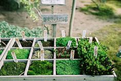 mosses /  fresh herb corner