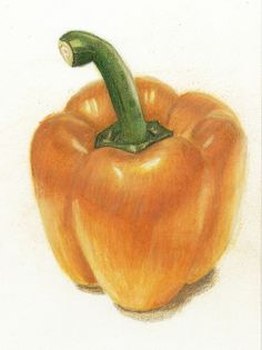 Coloured Pencil Pepper