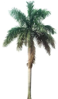 40 Ideas Tree Plan Png Tropical Plants For 2019 Plant Images, Plant Pictures, Tree Plan Png, Palm Tree Png, Tree Psd, Tree Photoshop, Online Nursery, Tree Sketches, Tree Photography