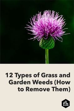 12 Types of Grass and Garden Weeds (How to Remove Them) Garden Weeds, Garden Plants, Weed Science, Types Of Grass, Lawn Fertilizer, Yard Waste, Weed Seeds, Weed Killer, Replant