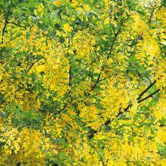 Záplava kvetinových strapcov