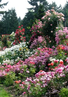 Enchanting Rose Gardens