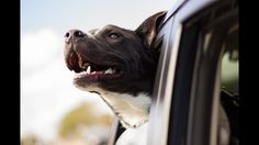 Taking your pet on a long car ride is not easy feat but with these great safety tips you'll be ready to go, furry friend and all!