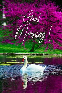 Good Morning Friends Images, Happy Good Morning Quotes, Good Morning Photos Download, Latest Good Morning Images, Good Morning Gif, Good Morning Greetings, Good Morning Best Friend, Happy Morning Images, Morning Msg