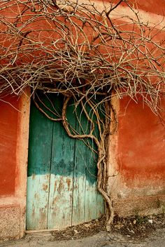 Fantastic colors   The tree has merged to the door in an artistic way.