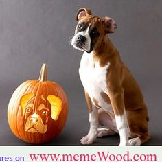 Boxer – Energetic and Funny Dog Pumpkin, Easy Pumpkin Carving, Pumpkin Stencil, Pumpkin Carvings, Pumpkin Ideas, Boxer And Baby, Boxer Love, Boxers, Dog Stencil
