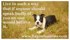 Wonderful words to live by.:)  #bostonterrier #cutepuppies #bostonterrierpuppies