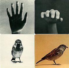 """Bruno Munari—Excerpted from """"Immagini Della Realta""""—Danese 1977"""