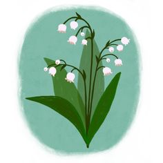 Lily of the valley - botanical, flower illustration by Laurence Lavallée aka Flo