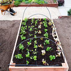 Construye tu cama de cultivo paso a paso siguiendo estas instrucciones, verás cómo te libras de plagas, malas hierbas y trabajarás en una posición más cómoda.