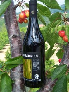 Monday Monday  so good to me .......#Giribaldi #Barolo #wine