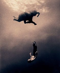 This is Gregory Colbert a photographer. These photos are unedited and real. He swims with these animals. Go to ashes and snow by Gregory Colbert and watch the video and check out how the photos were on display. Underwater Photography, Animal Photography, Amazing Photography, Elephant Photography, Snow Photography, Swimming Photography, Wildlife Photography, Creative Photography, Elephas Maximus