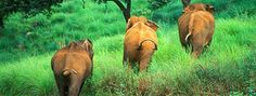 Kerala, Wildlife, India, Animals, Goa India, Animales, Animaux, Animal, Animais