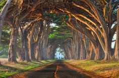 World's Most Beautiful Trees Photography - Natural tree tunnel, Portugal. Photo by: unknown