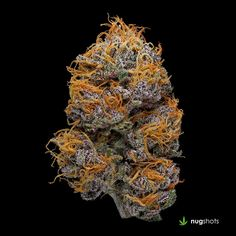 Weed Online Supply is a fast and discreet place to Buy Marijuana/ Buy weed /Buy cannabis at affordable prices within USA and out of USA.Get the best with us as your satisfaction is our priority Visit weedonlinesupplier dot com for more or contact at 978 Buy Cannabis Online, Buy Weed Online, Cannabis Seeds For Sale, Cbd Oil For Sale, Weed Seeds, Medicinal Herbs, Growing Grapes, Ganja
