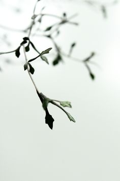 Frigs n Twigs.