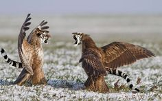 10 animais híbridos que iriam deixar o mundo bem mais curioso | O Buteco da Net
