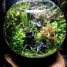 Best Fish to Keep in a Bowl -Fish Bowl Centerpiece (Buying Guide) Video Credit Planted Bowl Dutch Style on IG Planted Aquarium, Aquarium Garden, Aquarium Landscape, Mini Aquarium, Glass Aquarium, Freshwater Aquarium Fish, Aquarium Fish Tank, Small Water Gardens, Indoor Water Garden