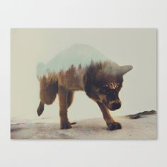 Buy Akiak The Husky by Andreas Lie as a high quality Canvas Print. Worldwide shipping available at Society6.com. Just one of millions of products available.