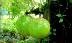 fresh-fruits-photos-19.jpg (630×379)