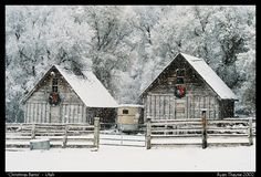 These barns are located up the south fork of the Provo Canyon in Utah. Every winter the owners hang wreaths above the doors for Christmas.