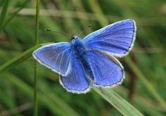 Butterflies for beginners...#homesfornature