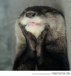 Happy otter is happy… actually, I think he looks like he is executing his evil plan.