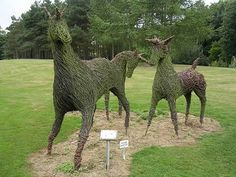 Grass grows on the earth, but doesn't necessarily have to stay on it. See funny ways of sculpting grass.
