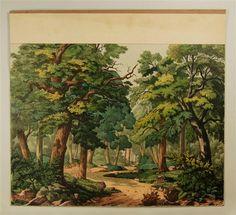 Wald. Hintergrund. Nr. 101.