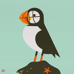 from the foggy and beautiful shores of the great state of maine comes puffin. hes cute, what else can we say? he eats fish? he can swim? he sounds like