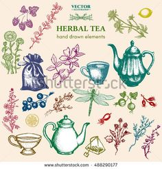 Herbal tea collection hand drawn decorative inking vintage sketch cups, teapot, dragonfly, herbs, currants, cranberries, cranberry, clover, herbs collection, herbal tea set vector