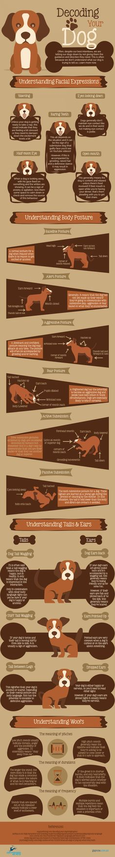 Decoding Your Dog [Infographic]