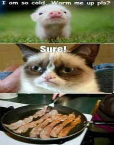 Really Hilarious Grumpy Cat Pics! Hilarious Photos Grumpy cat has become more than just a sad or annoyed cat - Grumpy Cat Quotes, Grump Cat, Funny Grumpy Cat Memes, Cat Jokes, Grumpy Face, Squirrel Memes, Funny Minion, Angry Cat Memes, Cat Cat