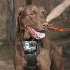 Just found this Camera Mount Dog Harness - Action Camera Dog Harness -- Orvis on Orvis.com!