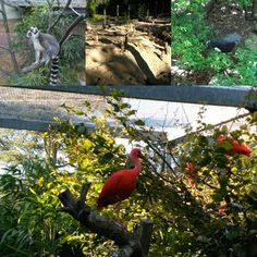 Animals layout. Mulhouse (France) Zoo and Botanical Garden. Amateur pics, but colourful. I try to do my best, but no professional camera own. Momenaneously. 🌸