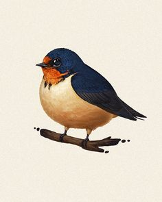 Fat Bird #6: Barn Swallow  I'll be getting these ready to sell as prints when I get back from comic-con. If you have any particular favorites, drop me a line and let me know which ones you fancy so I can make sure there are enough.