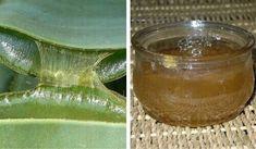 Aloe vera bitkilerindeki jel, besin açısından zengin olduğu ve çeşitli tedavi edici uygulamaları bulunduğu için çeşitli kültürlerde oldukça değerlidir.
