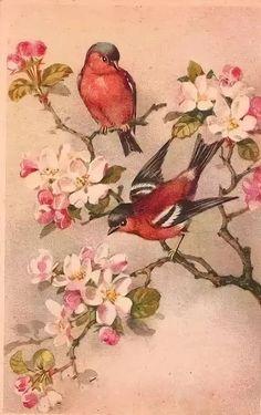 птицы декупаж винтаж: 14 тыс изображений найдено в Яндекс.Картинках