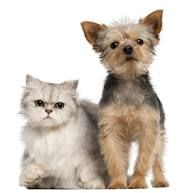 Let us know about  your pet care  and dog haircut services  at Angela's Super Grooms a full-service of the  mobile pet grooming  services  in  your  affordable  prices in Santa Barbara..