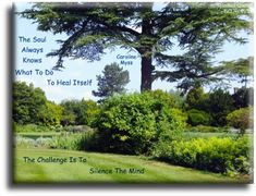 """""""The soul always knows what to do to heal itself, the challenge is to silence the mind."""" Caroline Myss quote on nature photo - Spiritual Quotes To Live By"""